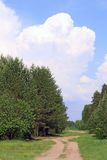 Path among green trees, blue sky with big cloud Stock Images