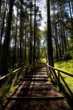 Path With Green Trees in Forest Stock Photography