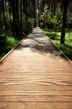 Path With Green Trees in Forest Royalty Free Stock Images