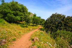 Path in the green. Path among green trees in the springtime, Sicily, Italy Royalty Free Stock Image
