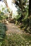 Path between green vegetation in a garden. Path between with green vegetation in winter in Lisbon, Portugal range bush fir beautiful landscape color cedar ridge stock images