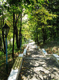 Path in the grove forest wood park nature photo.  Stock Image
