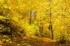 Path guiding through autumn park Royalty Free Stock Images