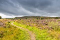 Path through the Heath Royalty Free Stock Photos