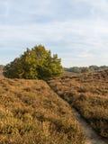 Path through heathland in fall Stock Photos