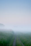 Path into heavy fog background Stock Photography