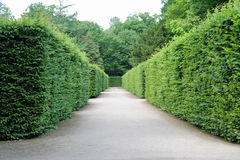 Path between hedges Royalty Free Stock Images