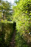 Path between hedges Royalty Free Stock Photo