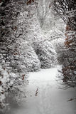 Path between high bushes at forest covered with snow Stock Photo