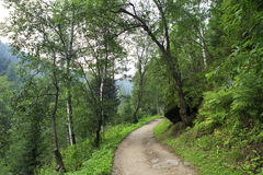 Path for hiking on a mountain slope Sinyuha. Royalty Free Stock Images