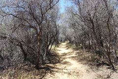 Path. Hiking trail at Temescal Canyon lined with twisted branches Stock Images