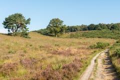 Path through hills in dutch heathland Royalty Free Stock Images