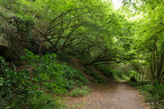 Path in Hornbeam temperate forest Stock Photos