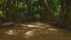 The path in a huge tropical palm-tree forest in the shadows. Of the branches of palm trees stock video footage