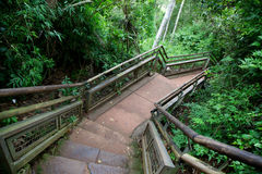 Path through Iguazu National Park Royalty Free Stock Photos