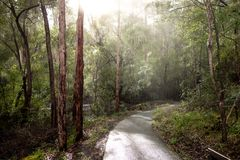 Free Path In A Karri Tree Forest In Western Australia During Rain Royalty Free Stock Photos - 126822178