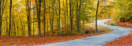Free Path In Autumn Forest Royalty Free Stock Photos - 35308258