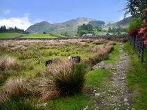 Free Path In Country With Two Sheep Royalty Free Stock Photos - 86683458