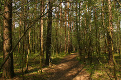 Free Path In Forest Stock Photo - 14182020