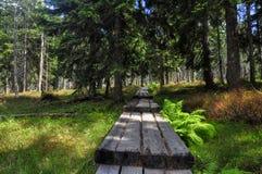 Path In Krkonose Royalty Free Stock Photo