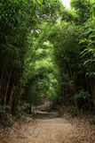 Path In Lush Bamboo Forest In Hong Kong Stock Image