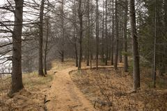 Free Path In The Forest, Late Fall Royalty Free Stock Images - 46595409
