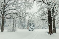 Path In The Woods In Winter, Natural Winter Landscape Background Stock Images