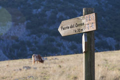 Path indicator with cow. Royalty Free Stock Photo
