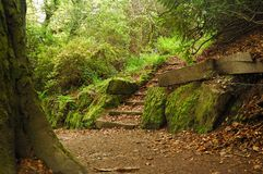 Path inpark. A path in cardiff park with steps, tree, stone and moss stock photos
