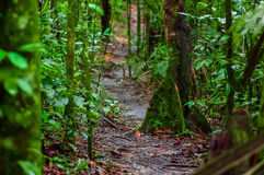 Path inside of the amazon rainforest, surrounding of dense vegetation in the Cuyabeno National Park, South America Stock Photos
