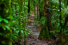 Path inside of the amazon rainforest, surrounding of dense vegetation in the Cuyabeno National Park, South America Royalty Free Stock Photography
