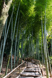 Path inside a Bamboo forest in Kyoto Stock Photography
