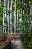 Path inside a Bamboo forest in Kyoto Royalty Free Stock Images