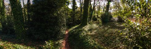 Path inside the forest of Villa Gesell stock images