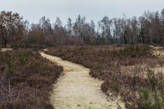 Path inside of a Heather Landscape in Germany. Early Spring time inside of a heather landscape with heath and trees Royalty Free Stock Photo