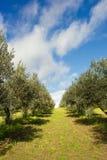Path in Italian vineyard stock photography
