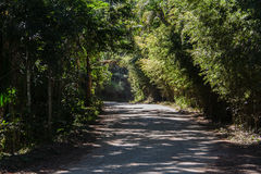 Path in Itatiaia Park Rio de Janeiro Brazil Stock Photo