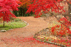Path and Japanese Maples Royalty Free Stock Photos