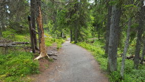 Path. Jogging path in koli national park, Finland Stock Photos