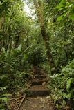 Path in Jungle Royalty Free Stock Photography