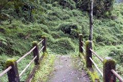 Path through jungle Royalty Free Stock Image