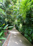 Path in the jungle Royalty Free Stock Photo