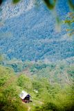 Path through the jungle forest in Koh Samui. Royalty Free Stock Image