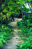 A path in the jungle at Havelock Island royalty free stock photography