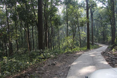 Path in the Jungle Stock Photo