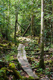 Path through jungle in Kalimantan, Indonesia Royalty Free Stock Image