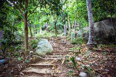Path in the jungle of Koh Samui Stock Photos
