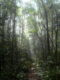 Path in the jungle. In Malaysia stock photography