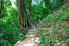 Path in the jungle, Palenque Maya ruins, Mexico. Path in the tropical jungle near Palenque Maya ruins, Mexico stock images