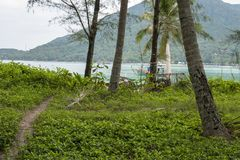 Path in the jungle that reaches the sea Royalty Free Stock Photography